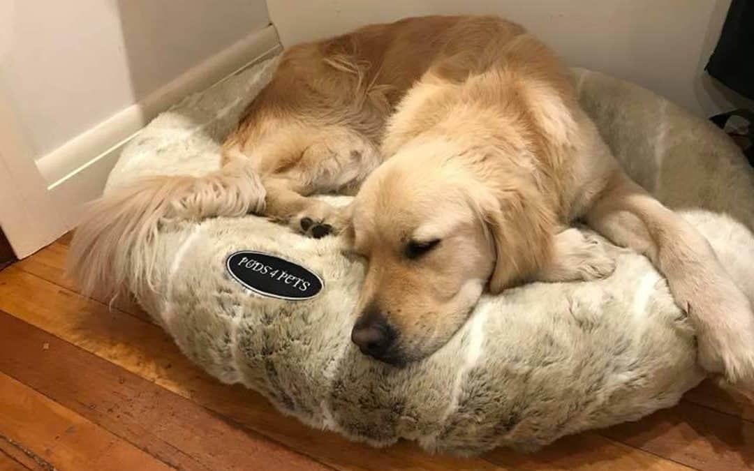 Why You Should Choose Pods4Pets Dog Beds