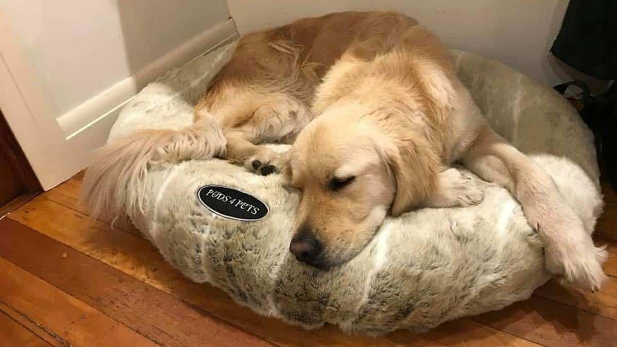 Best Pods4Pets Dog Beds