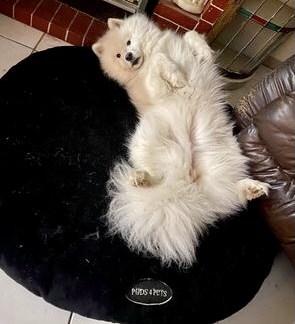 Black Mink Dog Bed