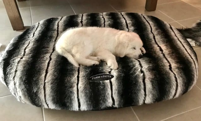 Black & White Wolf Faux Fur Dog Bed