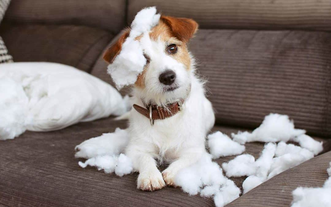Debunking the Myth of an Indestructible Dog Bed