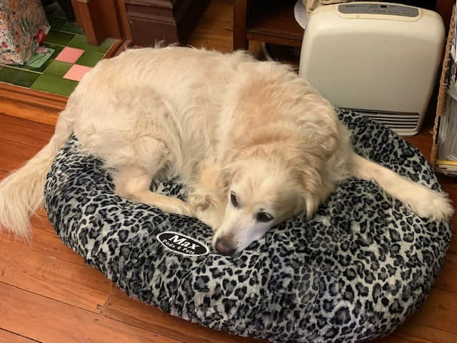 Grey Leopard Dog Bed Cover