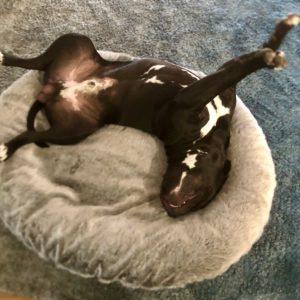 Indoor Dog Beds